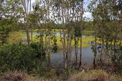 Kakadu National Park (cathm2) Tags: travel trees green nature nationalpark nt australia kakadu northernterritory wetseason