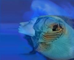 MetaMorphoZis -eXistenZ (My Baby Mia) Tags: blue portrait surreal fantasy conceptual innamoramento squerish