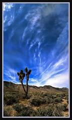 Longwayhome (Geo_grafics) Tags: california cactus sky bw panorama cloud nature cali clouds desert pano vert socal vertorama