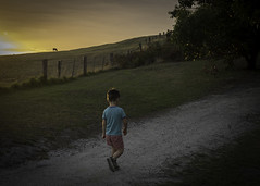 Up the hill (jen 3163) Tags: light boy sunset rural fence walking countryside cow child dusk path walk hill sidelighting inverloch sidelit sidelight