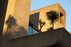 Palm shadows | Barbican at sunset-1 (Paul Dykes) Tags: uk sunset england london architecture modernism barbican modernistarchitecture brutalism modernist brutalist cityoflondon barbicancentre
