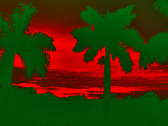 Sunkissed Palm Trees (soniaadammurray - On & Off) Tags: trees red abstract green nature leaves manipulated palms experimental remember colours wind branches martinluther quotes davidhockney sometimes breeze symphony sunkissed digitalphotography henrywadsworthlongfellow terriguillemets