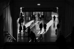 In a gray city. (Greyhumors) Tags: life city morning light people bw italy sun sunlight white black milan station canon persona 50mm lights morninglight interiors day shadows place walk interior milano ombra central pic tourist ombre persone luci stazione bianco nero bianconero luce interno interni posto citt internal centrale luoghi 2016 luogo morninglights lucedelsole graycity milanocity canon600d ininterni