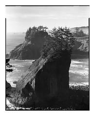 Oregon Coast (Summicron20/20) Tags: camera field inch kodak convertible delta 11 8x10 series 100 delta100 f11 ilford v8 xtol cooke deardorff xva 476mm