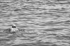 DSC_1134.jpg (cptscarlett78) Tags: swimming nikon scarlett sea nikon tom turkey harbour aegean d7100 d7100 bodrum