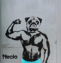 Fuerza, fuerza bruta. (Necio.) Tags: stencil colombia pug gym estencil