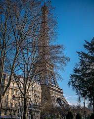 La Tour Eiffel - Eiffel Tower (y.caradec) Tags: trees mars paris france tree tower clouds lumix march europe ledefrance tour eiffeltower eiffel arbres toureiffel 16 nuages eiffelturm arbre iledefrance immeuble 2016 gx7 dmcgx7 lumixgx7 march2016 mars2016