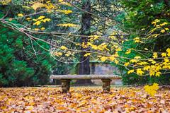 Bench (newbs216) Tags: autumn trees landscape mtwilson