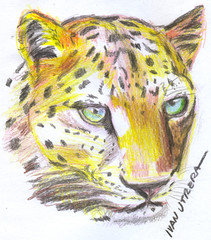 leopardo en lapices de colores (ivanutrera) Tags: wild animal leopardo sketch drawing wildlife felino draw dibujo lapicesdecolores dibujoenlapicesdecolores