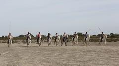 Un jour  Mjanes (DomaineMjanes) Tags: france nature train course promenade arles sud ricard visite domaine chevaux camargue saintesmariesdelamer poulain quitation taureaux camarguaise gardian arlsienne manade mjanes ferrade gardians