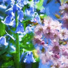 Spring Sensations (Lemon~art) Tags: pink blue light texture sunshine bluebells spring blossom manipulation impressions sensations topaz overlappingdiptych