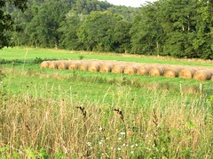 Kim Bollinger - Hay, Look at That (Missouri Agriculture) Tags: farming hay bales