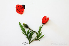 POPpies ART (*ameLIE*) Tags: flowers red white flower verde green love primavera nature illustration creativity spring drawing creative happiness natura lucky poppies april ladybug draw fiori aprile fiore rosso bianco fortuna poppie papavero coccinella pavaveri