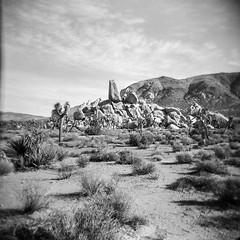 Ryan Ranch, No. 1 (a.k.a. Flash) Tags: 120 film landscape holga ruins december scan joshuatreenationalpark 2015 ryanranch