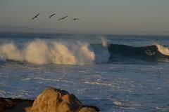 Birds Flyin' High (Bri3M) Tags: california blue cute beach home water birds cali fly flying monterey sand rocks waves curls beaches splash pacificgrove birdy crashing splashing