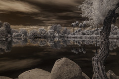 Scenes From Santee Lakes #8147 (Bill Gracey) Tags: trees sky water clouds reflections ir highcontrast surreal palmtrees infrared otherworldly santeelakes infraredphotography convertedinfraredcamera