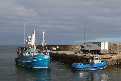 20th April 2016. Macduff Harbour, Aberdeenshire