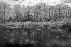 Winter in the Slough DSL6344 (iloleo) Tags: trees winter bw reflection nature landscape florida scenic sixmileslough nikond7000