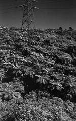 (eddieddieddie) Tags: newzealand bw bush 80s ferns agfa caffenolc 135format 35mmfilmscanningwellington