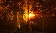 FIVE (Chrisnaton) Tags: trees sunset nature forest landscape sundown outdoor five eveningmood eveningcolors
