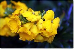 Avril 2016 (Photographies- Fr-M-F-) Tags: printemps birdy gardensflowers