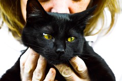 Emerald eyes (JustinMullenPhotography) Tags: new black green nature animal animals cat born model eyes kitten ears whiskers newborn meow wilderness paws emerald humans