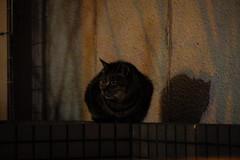 Today's Cat@2016-01-06 (masatsu) Tags: cat pentax osaka cc100 catspotting mx1 thebiggestgroupwithonlycats