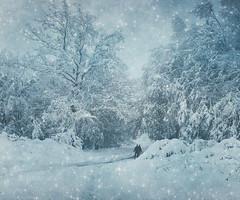 To be Together (R_Ivanova) Tags: nature landscape winter snow tree textured mountain white blue rivanova bulgaria риванова българия габрово зима природа пейзаж monochrome fav20