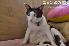04 (= ann =) Tags: cat toy photostory yotsuba danbo danboard nyanboard