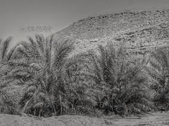 https://www.instagram.com/p/BAv70sEgcFj/ #ارشيفيه #نخل #الربيعية #القصيم #تصويري #نخلة #منظر #لقطة #طبيعة #منظر_جميل #جميل #رائع #خيالي #اشجار #شجر #طبيعي #قريتي #مزرعة #المزرعة #صبحهم_بالخير #ابيض_واسود #ابيض_و_اسود #ابيض_اسود #ابيض #و #اسود #الناس_الراي (Instagram x3abr twitter x3abrr) Tags: و نخل منظر طبيعي تصويري اشجار جميل مزرعة طبيعة المزرعة رائع اسود شجر لقطة ابيض نخلة خيالي القصيم ابيضاسود ابيضواسود منظرجميل الربيعية قريتي ارشيفيه الناسالرايقه صبحهمبالخير