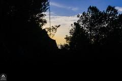 (Palermo Finestra sul Mondo) Tags: world blue trees sunset sea wild sky black color tree verde green window nature colors yellow alberi sunrise tramonto mare colore alba blu natura finestra giallo cielo sicily palermo albero colori nero sul sicilia mondo sferracavallo allaperto selvaggio barcarello pfsm