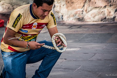 2015 - MEXICO - Morelia - Snake Charmer (Ted's photos - For Me & You) Tags: man male tattoo mexico nikon morelia outdoor snake fingers unescoworldheritagesite unesco bracelet d750 denim cropped michoacn kneeling vignetting snakecharmer denimjeans tedmcgrath moreliamichoacn tedsphotos nikonfx nikond750 tedsphotosmexicomorelia
