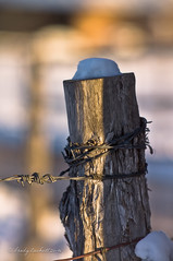 Fence Post with Snow (brady tuckett) Tags: sunset blur color macro nature colors leaves fence leaf natural bokeh fences m42 barbedwire f2 brady barbed manualfocus tuckett 135mm fencepost soligor manuallens legacylens m42mount m42lenses soligor135mmf2 bradytuckett