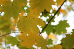 Falling Season (Mithaq Kazimi) Tags: trees brown tree green fall nature beauty garden golden leaf nationalpark spring focus seasons natural deep parks depthoffield falling greenery closeups leafs