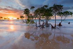 Sun-dancers (Louise Denton) Tags: ocean longexposure sea sun reflection water silhouette creek nt australia darwin flare mangroves leepoint casuarinabeach