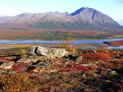 September Susitna River (glyphwalker) Tags: alaska landscape denalihighway susitnariver