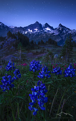 Twilight at Tatoosh (Sairam Sundaresan) Tags: oregon washington nationalpark spring twilight mountrainier marc 5d canon5d wildflowers alpenglow tatoosh sairam marcadamus canon5dmarkiii 5dmarkiii sairamsundaresan