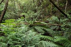 20160125-IMGP2581 (timhughes) Tags: australia tasmania hobart tassie mtwellington ferntree mountwellington 2016