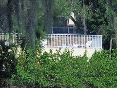 A White Fence Along the Creek (soniaadammurray - SLOWLY TRYING TO CATCH UP) Tags: flowers trees house window wall fence chairs spanishmoss boating shrubs digitalphotography poolcage phillippicreek