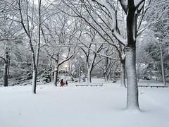 Winter Snow ((Jessica)) Tags: trees winter white snow storm weather boston seasons massachusetts snowstorm newengland lamppost somerville lexi medford pw winterstormlexi