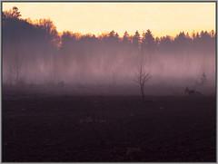 misty moor after sunset (batuk_bhagwan (Manos)) Tags: longexposure light sunset mist color nature landscape outdoor atmosphare fujixs1
