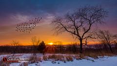 Retzer Fly Thru (andrewslaterphoto) Tags: winter snow ice nature birds wisconsin clouds sunrise canon landscape flock trail waukesha wi landscapephotography retzernaturecenter discoverwisconsin travelwisconsin 5dmarkiii andrewslaterphotography