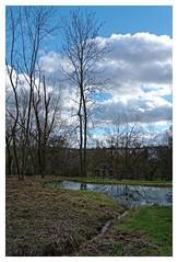 La mare (DavidB1977) Tags: france nikon mare arbre iledefrance 18105 valdemarne sucyenbrie d7100 ormessonsurmarne parcdpartementaldumorbras
