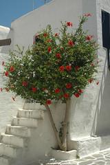 DSC_0451 (chaudron001) Tags: grece favoris