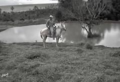 Peo boiadeiro (Vov Virso) Tags: planta rural lago paisagem campo arvore reflexo cavalo peo boiadeiro campeiro