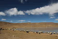 111027_2906 (Gordon C ) Tags: tibet