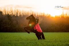 French kiss (artsuephotographie) Tags: horse france nature animals cheval femme bretagne frison romantique fresian paysdeloire talon artsue