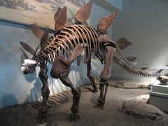 IMG_8847 (clare_and_ben) Tags: chicago museum fossil illinois dinosaur fieldmuseum stegosaurus presidentsday 2016