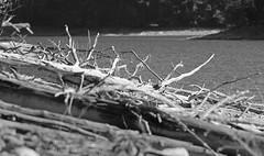 Driftwood2 (jb5860) Tags: artisticphotos bestartistic jb5860