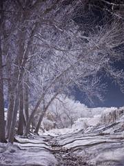 IR02 (Carlos Poveda Fotografia) Tags: leica tree nature ir infrared infrarrojos leicam8 voigtlandercolorskopar21mmf4 hoyair72filter